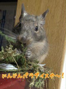 にんじんの葉っぱを食べるラッピー先生