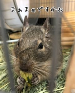 乾燥小松菜を食べるラッピー先生