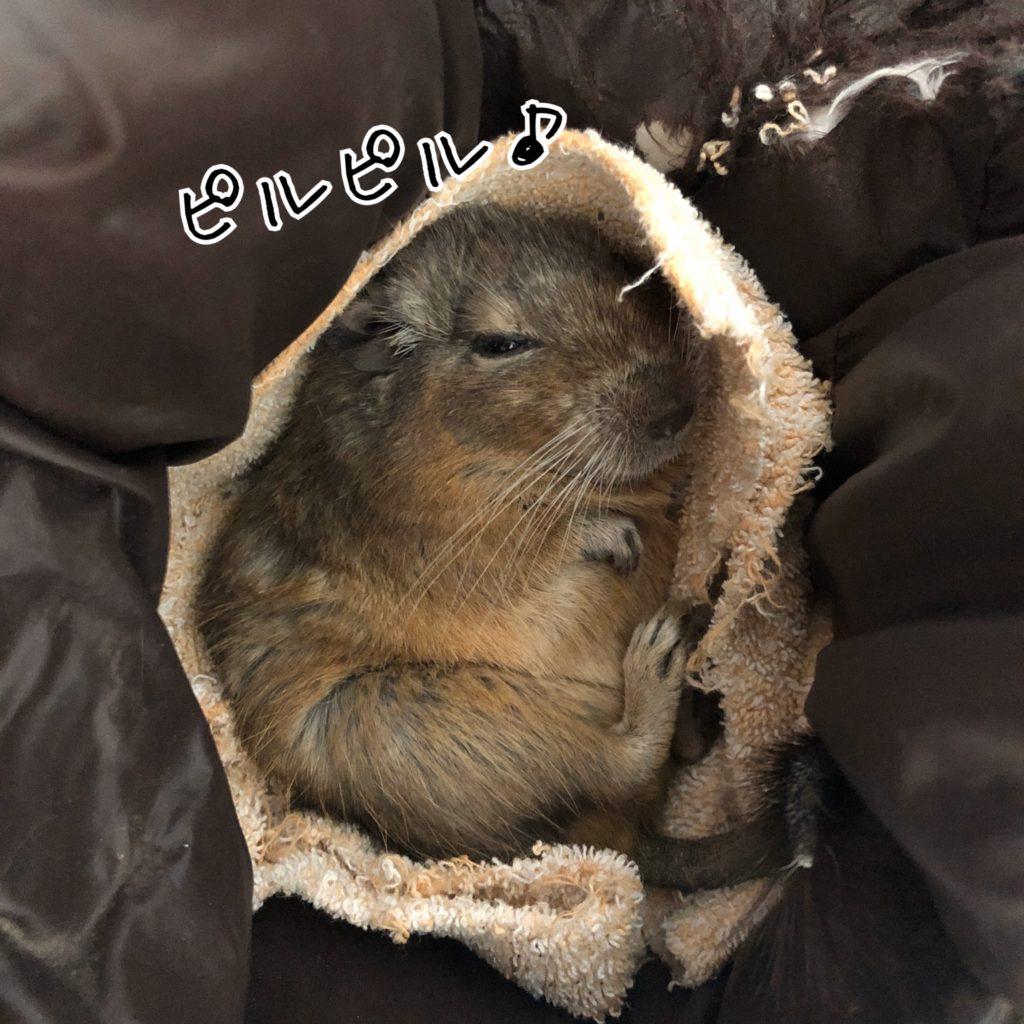 帽子の中で眠るラッピー先生