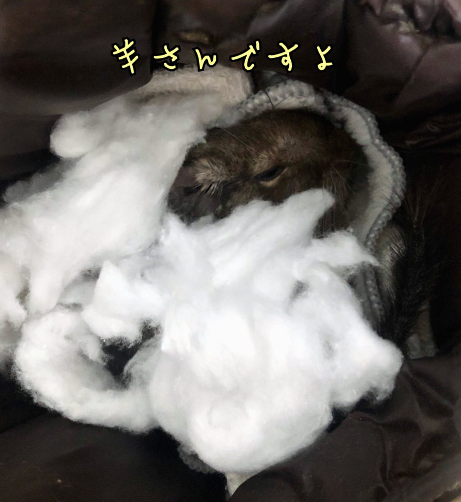 羊なデグー