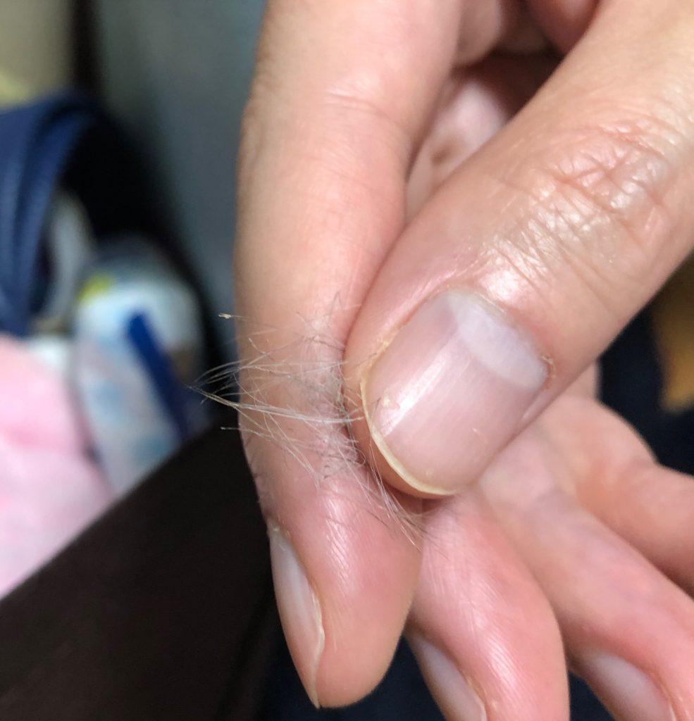 デグー先生の抜け毛